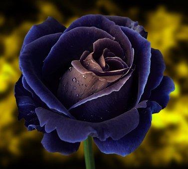 Rose, Spur, Flower, Bokeh, Macro, Nature, Plant, Thorns