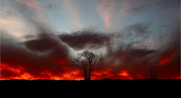 Sunset, Clouds, Tree, Nature, Landscapes