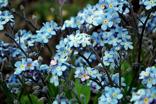 Nots, Flowers, Blue, The Delicacy