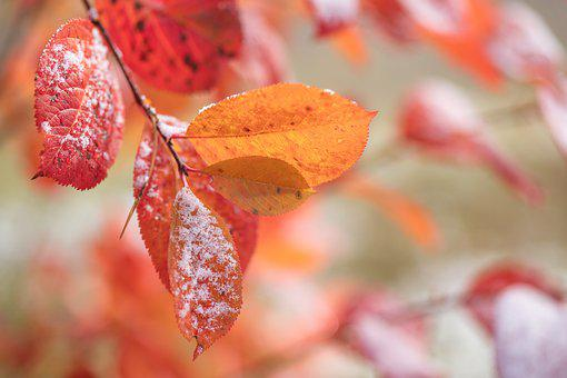 Autumn, Fall, October, Landscape, Leaf, Leaves, Season