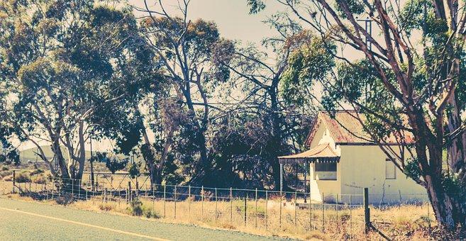 House, Old, Farm, Trees, Eucalyptus