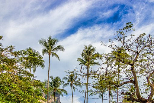 Thailand, Palm Trees, Summer, Island