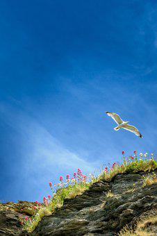 Seagull, Approach, Start, Land, Cliffs, Water, Rock