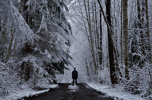 Boy, Snow, Woods, Forest, Winter, Skiing, Ski, Portrait
