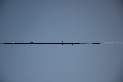 Current, Power Line, Sky, Blue, Bird, Birds, Meeting