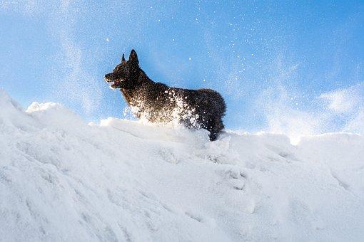 Dog, Snow, Black, Evening, Snowdrift