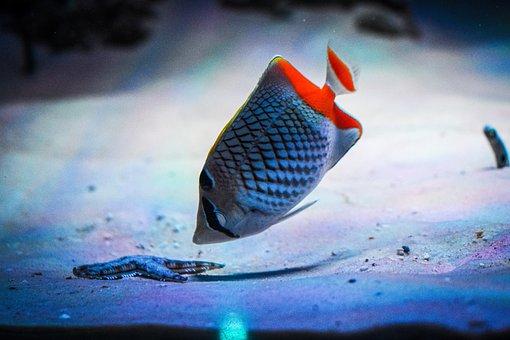 Fish, Nature, Colour, Starfish, Sand, Water, Ocean