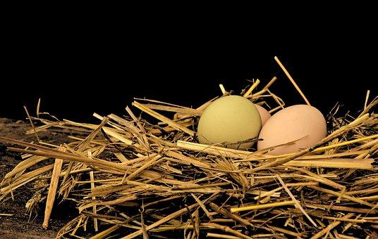 Egg, Hen's Egg, Straw, Straw Nest, Nest, Scrim, Easter