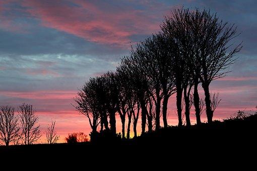 Sunset, Nature, Trees, Clouds, Landscape