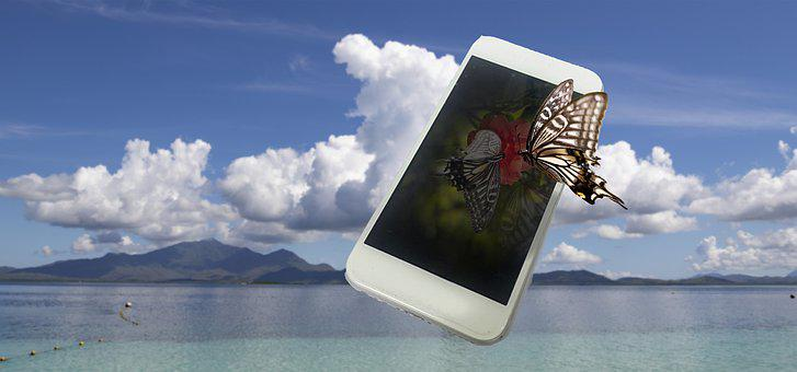 Cellphone, Butterfly, Sea, Water, Nature, Travel