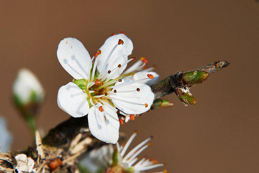 Spring, Blossom, Bloom, Macro, Nature, White, Branch