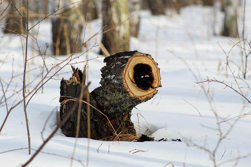 Winter, Forest, Stump, Saw Cut, Tree, Camera