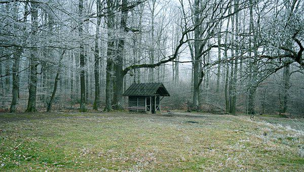 Forest, Winter, Trees, Wintry, Hut