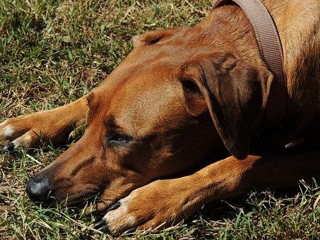 Dog, Pet, Animal, Canine, Mammal, Nature, Friend, Fur
