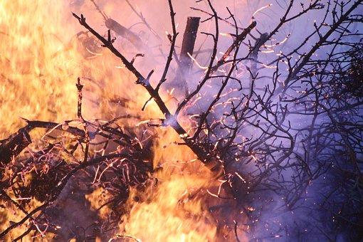Forest Fire, Fire, Beach, Campfire, Burn, Flame, Summer