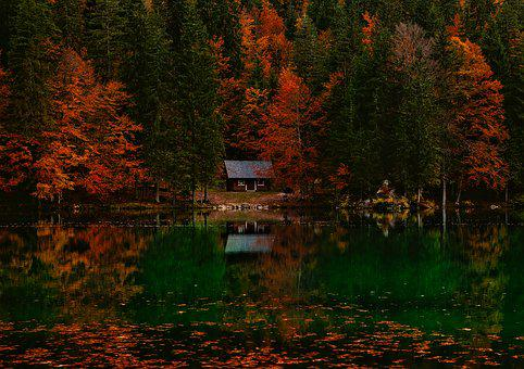 Italy, Seasons, Autumn, Fall, Foliage, Forest, Trees