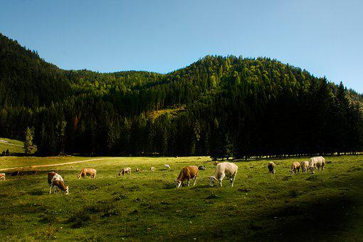 Landscape, Cows, Agricultural, Wood, Grass, Green, Sky