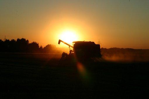 Nature, Sunset, Sunlight, Landscape, Harvest, Corn