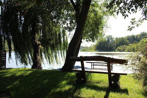 Lake, Bank, Tree, Nature, Wood, Green, Log, Green Tree