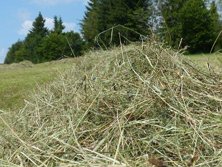 Hay, Grass, Dry, Dried, Hay Gut, Steam, Grass Swaths