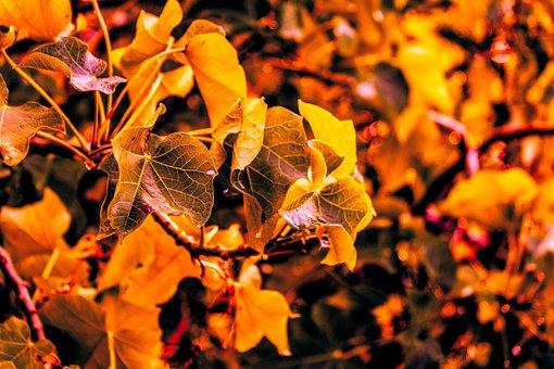 Autumn Leaves Background, Autumn Leaves