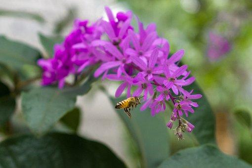 Magenta, Bee, Green, Landscape, Nature
