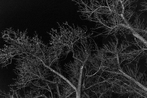 Tree, Night, Dark, Abstract, Black