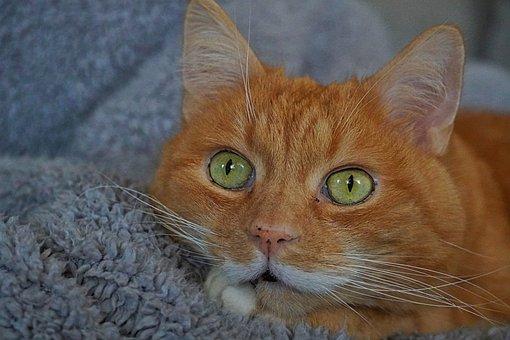 Cat, Cat Love, Animal Lover, Domestic Cat, Pet, Animal
