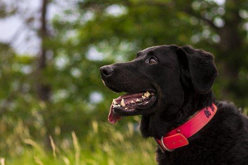 Dog, Nature, Pet, Animal, Company, Exterior, Mountain