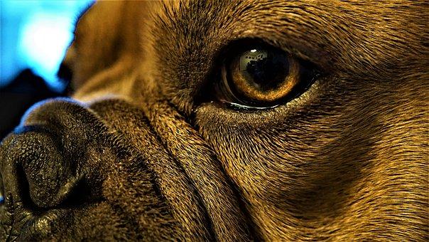 Eye, Iris, Pupil, Nose, Dog, Animal, Fur