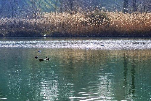 Landscape, Nature, Lake, Water