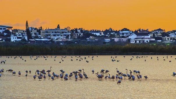 Lake, Sunset, Birds, Biotope, Swamp, Water, Landscape