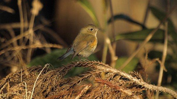 Natural, Creatures, Wild Birds, Bird, Little Bird