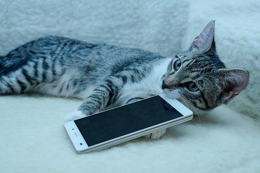 Cat, Small, Mackerel, Mobile Phone, Phone, Kitten