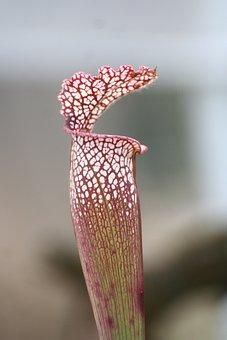 Venus, Carnivorous, Nature, Plant, Case, Flower