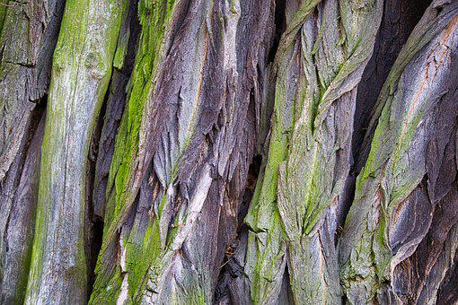 Broken Up, Old Tree, Nature, Plant, Bark
