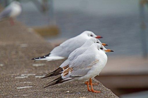 Seagull, Animal, Bird, Animal World, Sea Birds, Trio