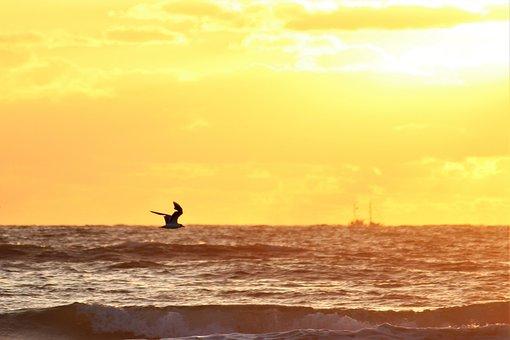 Sea, Sunset, Ocean, Sky, Landscape, Clouds, Ship, Bird