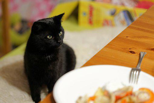 Cat, Table, Steal, Thief, Eat, Black, Animal
