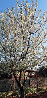Tree, Spring, Sun, Nature, Easter Monday, Green