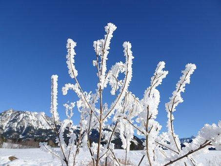 Winter, Wintry, Frozen, Snow, Snow Landscape, Snowy