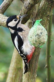 Bird, Woodpecker, Forest Bird, Fat Balls