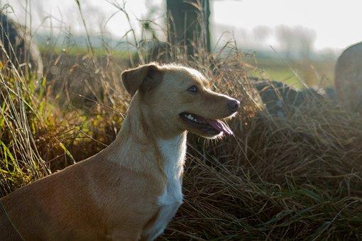 Dog, Animal, And The Tramp, Nice, Mammal, Fur