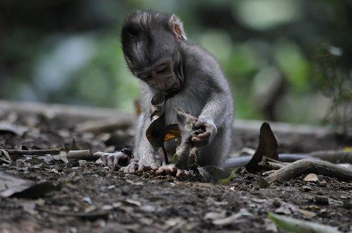 Monkey, Baby, Jungle, Animal World