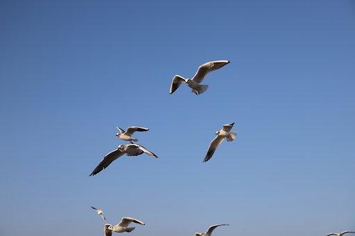 Seagull, Birds, Gulls, Seagulls, Bird, V, Istanbul