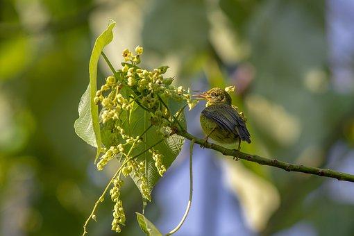 Bird, Nature, Wildlife, Animal, Outdoors, Beak, Feather