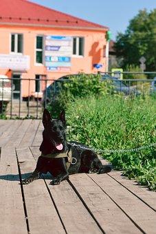 Black Dog, Greens, Summer, Stroll, With A Dog