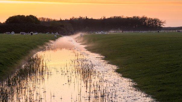 Canal, Sheep, Sunset, Farmland, Holland