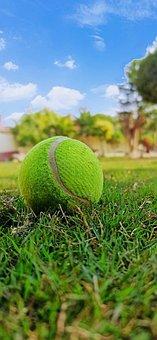 Ball, Cricket, Player, Cricketer, Game
