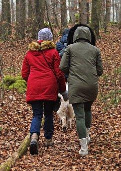Forest, Women, Dog, Walk, Cold, Winter, Landscape
